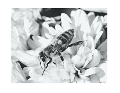 Bee Flower Poster Print Art, 11 x 14 Inches, Black White Grey Color, Modern Home Decor
