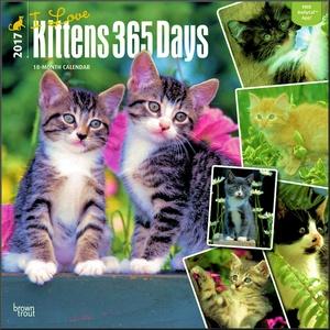 Kitten Calendar 2017 ~ Deluxe Wall Calendar (12x12)