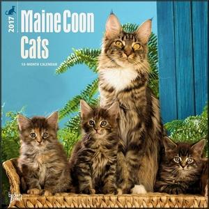 Maine Coon Cats Calendar 2017 ~ Deluxe Wall Calendar (12x12)