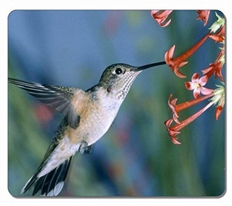 Julia Gauley Hummingbird Animal Art Natural Customized Mouse Pad Rectangle Mouse Pad Gaming Mouse mat in 220mm180mm2mm JG520018