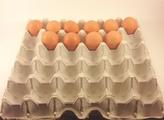 Biodegradable Chicken Egg Flats - Holds 30 eggs (12)