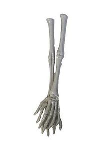 Pair of Halloween Skeleton Hand and Arm Tongs Servers by Halloween