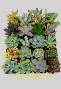 20 Set Unique Succulents Assortment